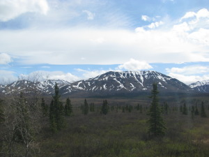Denali NP, May 2014 274
